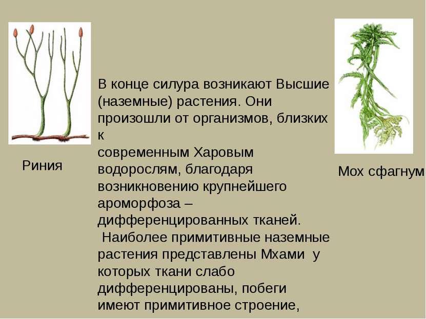 В конце силура возникают Высшие (наземные) растения. Они произошли от организ...
