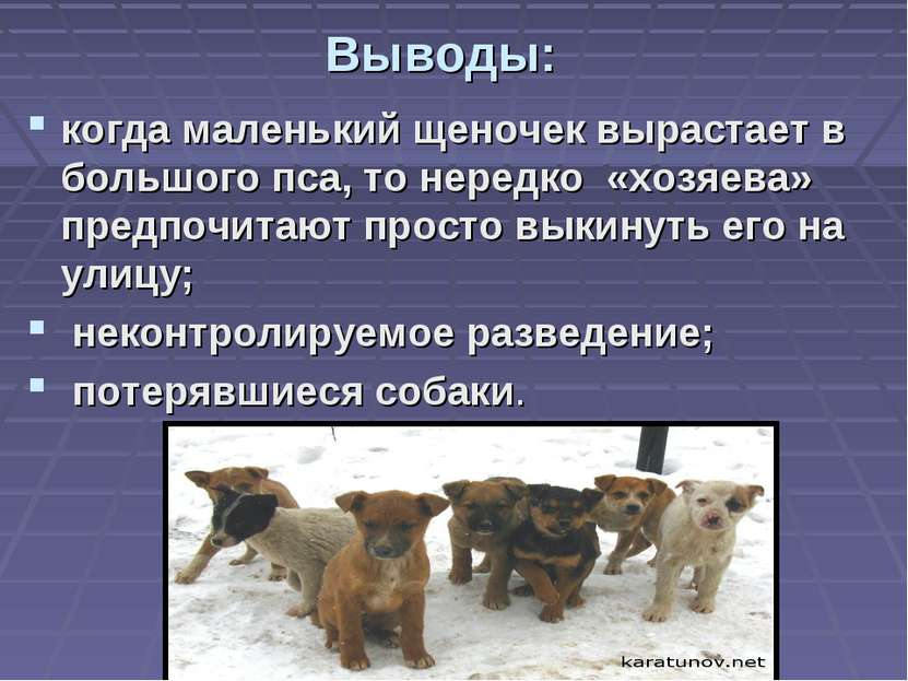 Выводы: когда маленький щеночек вырастает в большого пса, то нередко «хозяева...