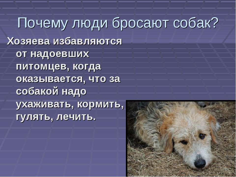 Почему люди бросают собак? Хозяева избавляются от надоевших питомцев, когда о...