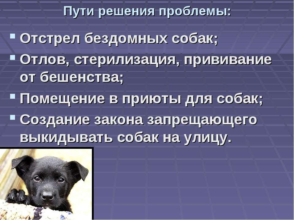 Пути решения проблемы: Отстрел бездомных собак; Отлов, стерилизация, прививан...