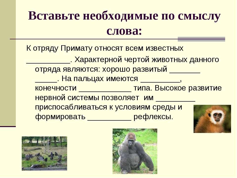 Вставьте необходимые по смыслу слова: К отряду Примату относят всем известных...