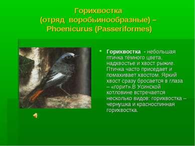 Горихвостка (отряд воробьинообразные) – Phoenicurus (Passeriformes) Горихвост...