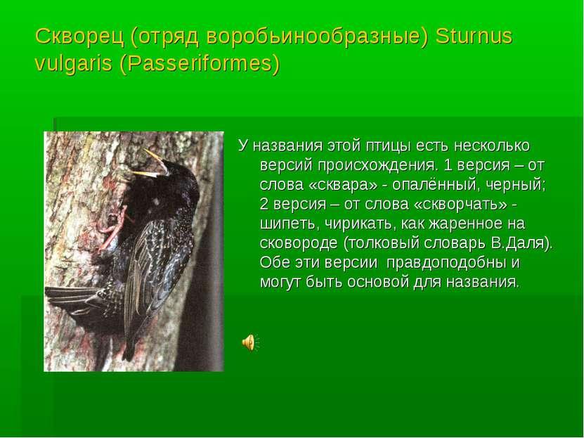 Скворец (отряд воробьинообразные) Sturnus vulgaris (Passeriformes) У названия...