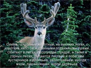 Олени – стройные животные, на высоких ногах, с коротким хвостом и длинными по...