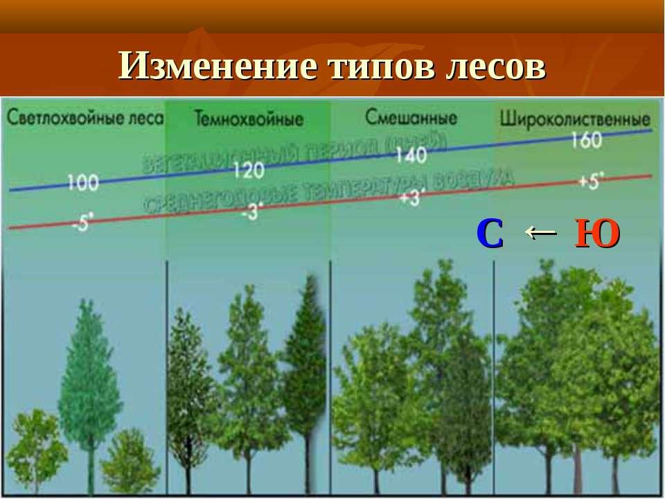 Изменение типов лесов С ← Ю