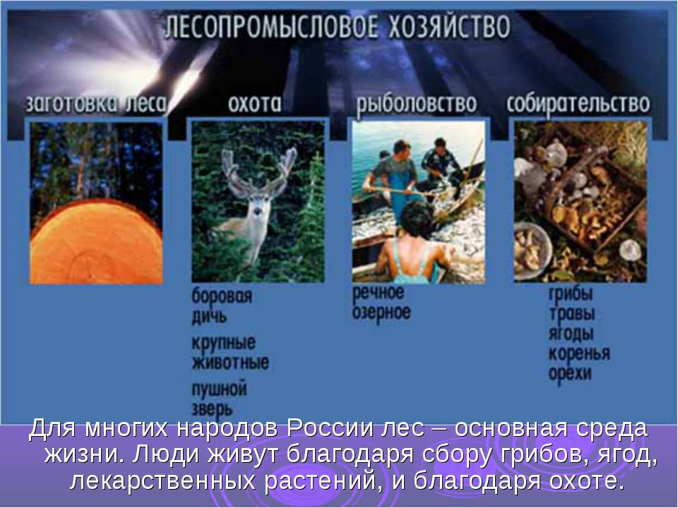 Для многих народов России лес – основная среда жизни. Люди живут благодаря сб...