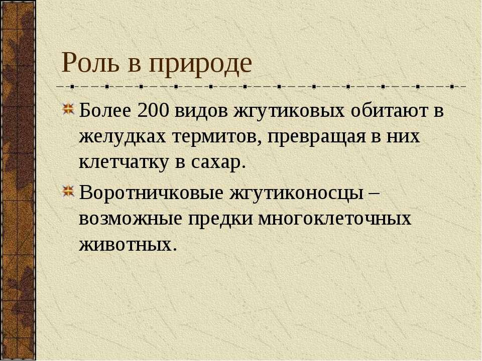 Роль в природе Более 200 видов жгутиковых обитают в желудках термитов, превра...