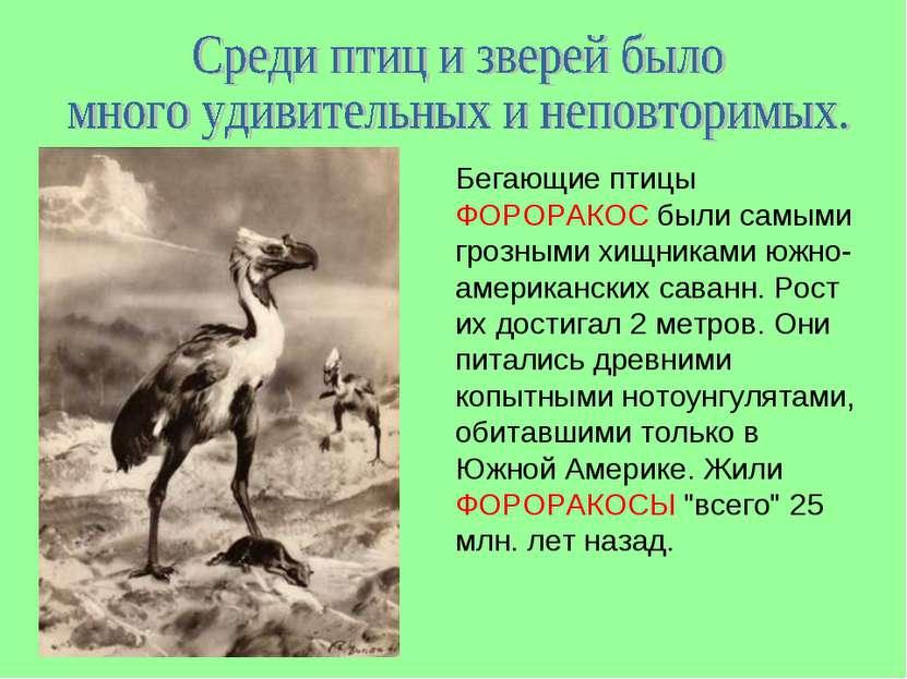 Бегающие птицы ФОРОРАКОС были самыми грозными хищниками южно-американских сав...