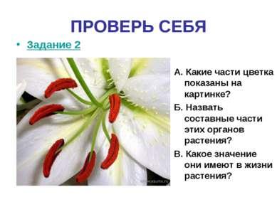 ПРОВЕРЬ СЕБЯ Задание 2 А. Какие части цветка показаны на картинке? Б. Назвать...