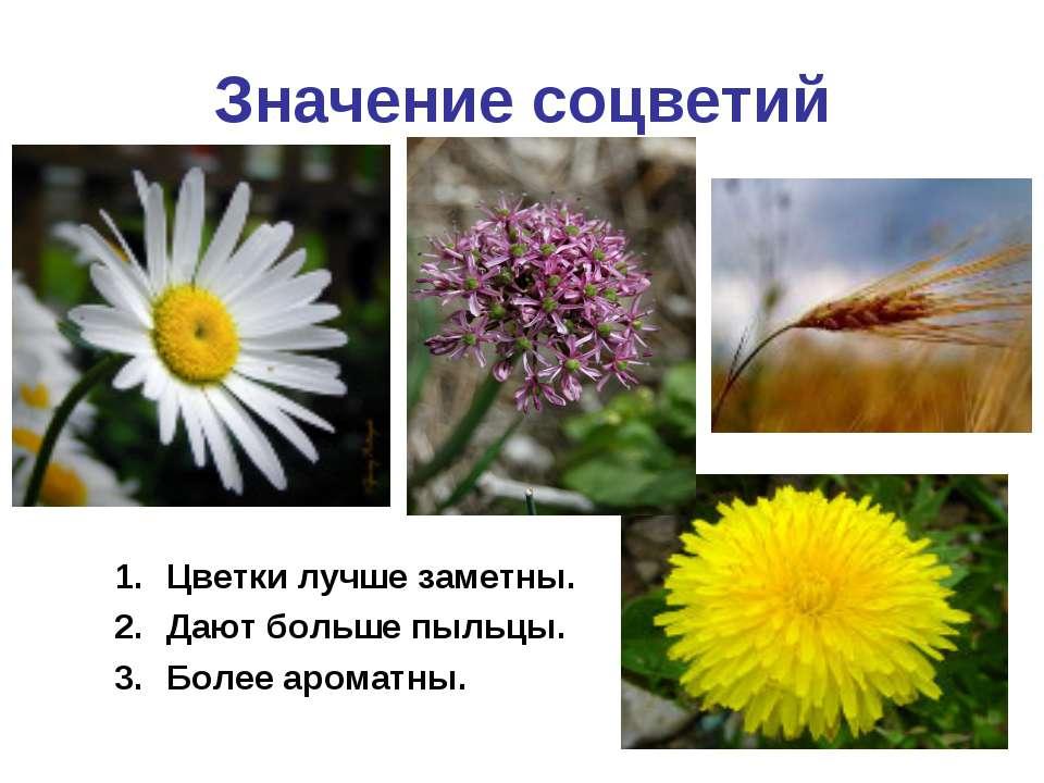 Значение соцветий Цветки лучше заметны. Дают больше пыльцы. Более ароматны.