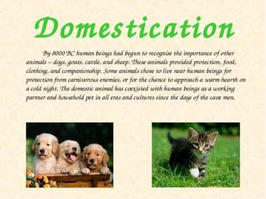 Domestication By 8000 BC human beings had begun to recognise the importance o...