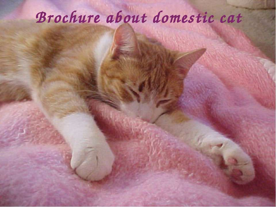 Brochure about domestic cat