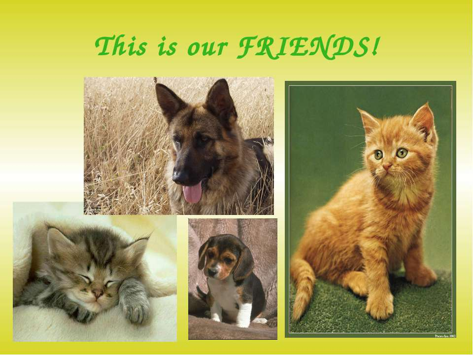 This is our FRIENDS!