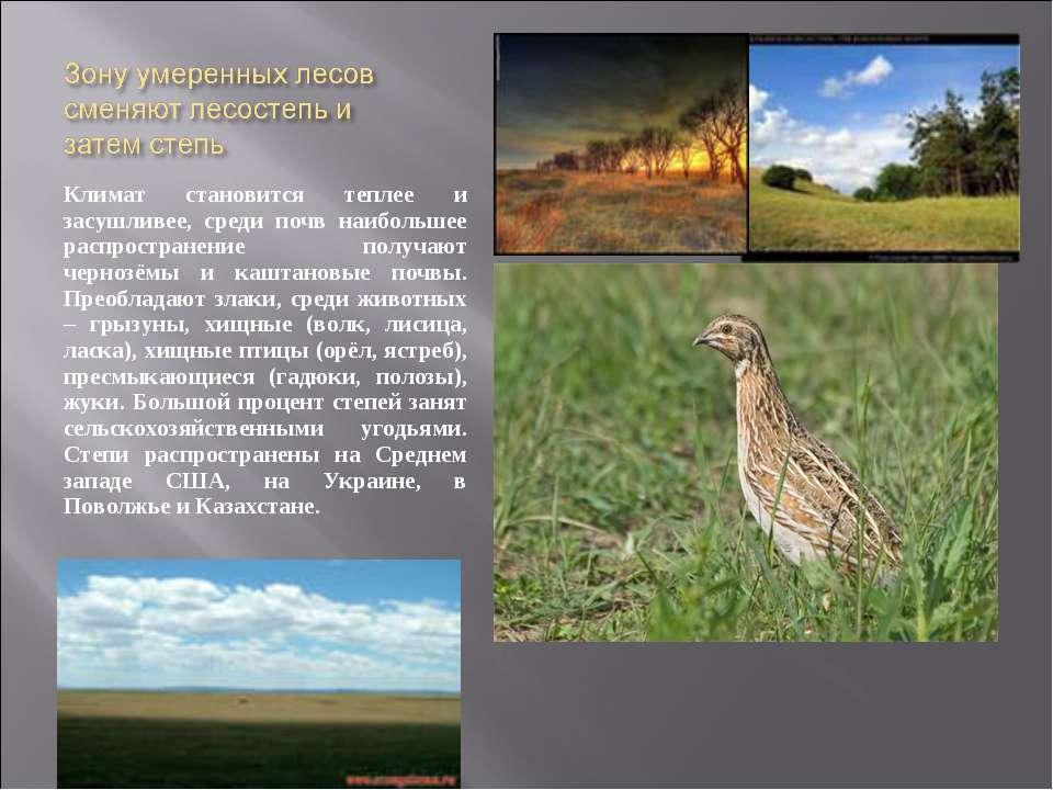 Климат становится теплее и засушливее, среди почв наибольшее распространение ...