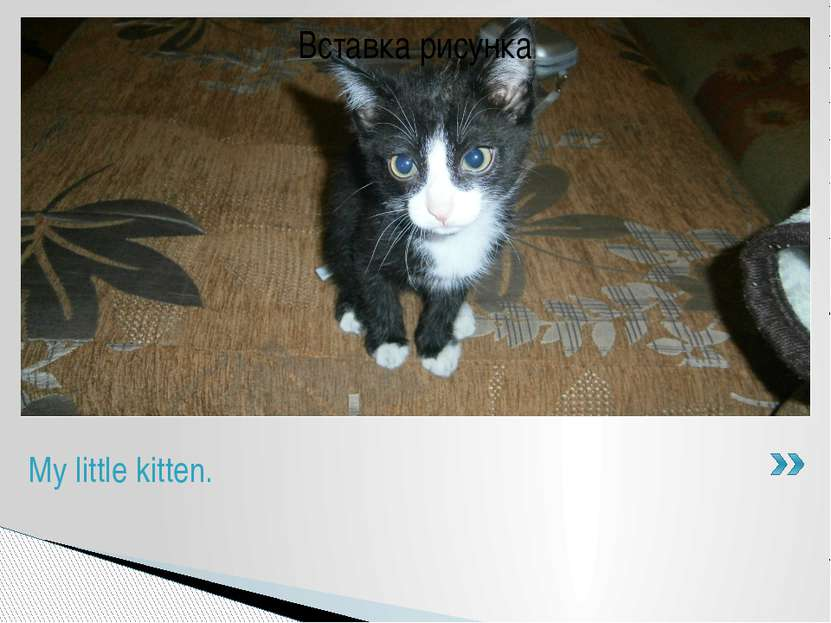 My name is Stanislav. I've got a pet. It's a kitten. It is black and white. H...