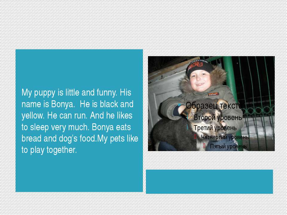 My puppy is little and funny. His name is Bonya. He is black and yellow. He c...
