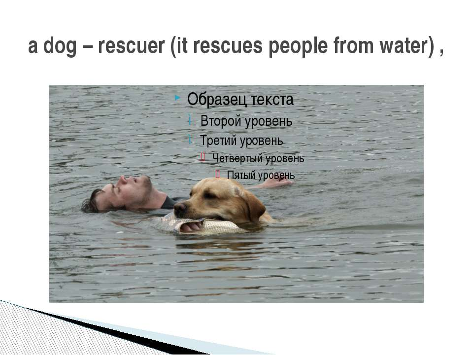 a dog – rescuer (it rescues people from water) ,