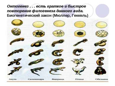 Онтогенез . . . есть краткое и быстрое повторение филогенеза данного вида. Би...