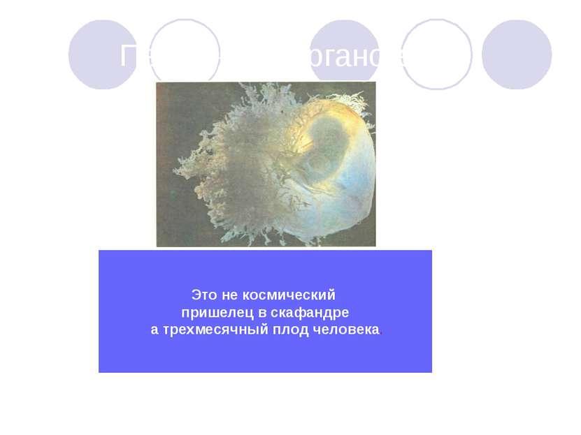 Первичный органогенез Это не космический пришелец в скафандре а трехмесячный ...