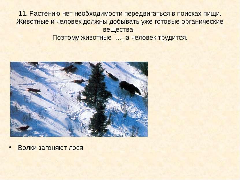 11. Растению нет необходимости передвигаться в поисках пищи. Животные и челов...