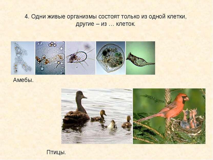 4. Одни живые организмы состоят только из одной клетки, другие – из … клеток....