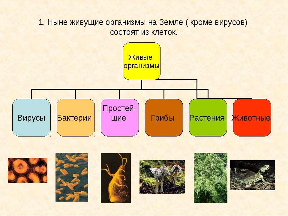 1. Ныне живущие организмы на Земле ( кроме вирусов) состоят из клеток.