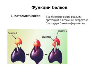 Функции белков 1. Каталитическая Все биологические реакции протекают с огромн...
