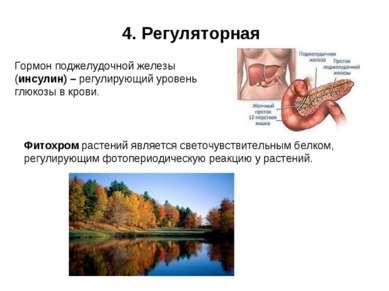 4. Регуляторная Гормон поджелудочной железы (инсулин) – регулирующий уровень ...
