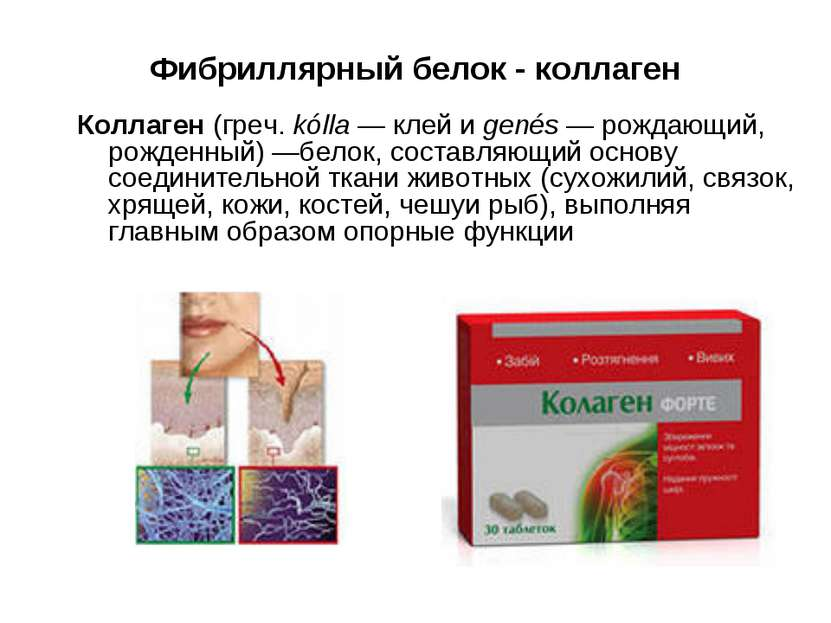 Фибриллярный белок - коллаген Коллаген (греч. kólla — клей и genés — рождающи...