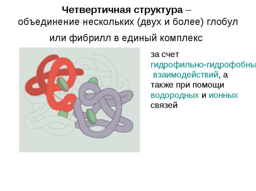 Четвертичная структура – объединение нескольких (двух и более) глобул или фиб...