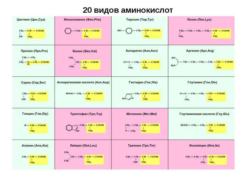 20 видов аминокислот