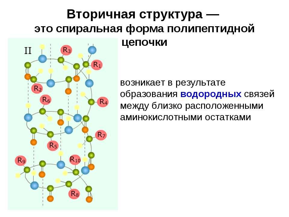 Вторичная структура — это спиральная форма полипептидной цепочки возникает в ...