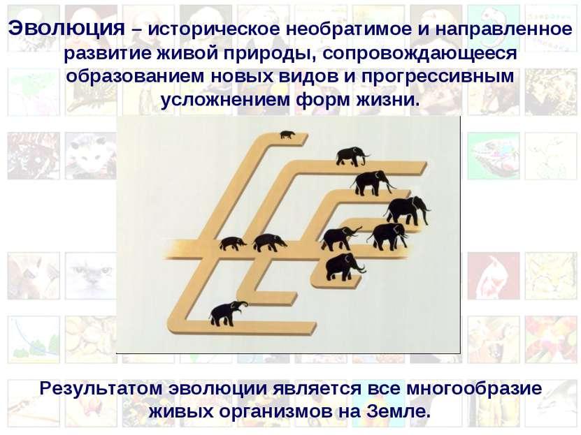 Эволюция – историческое необратимое и направленное развитие живой природы, со...
