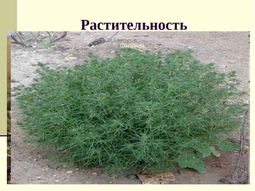 Растительность Атлас стр. 28 учебник Перечислите виды растений полупустыни и ...