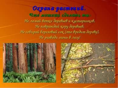 Охрана растений. Что можешь сделать ты: Не ломай ветки деревьев и кустарников...