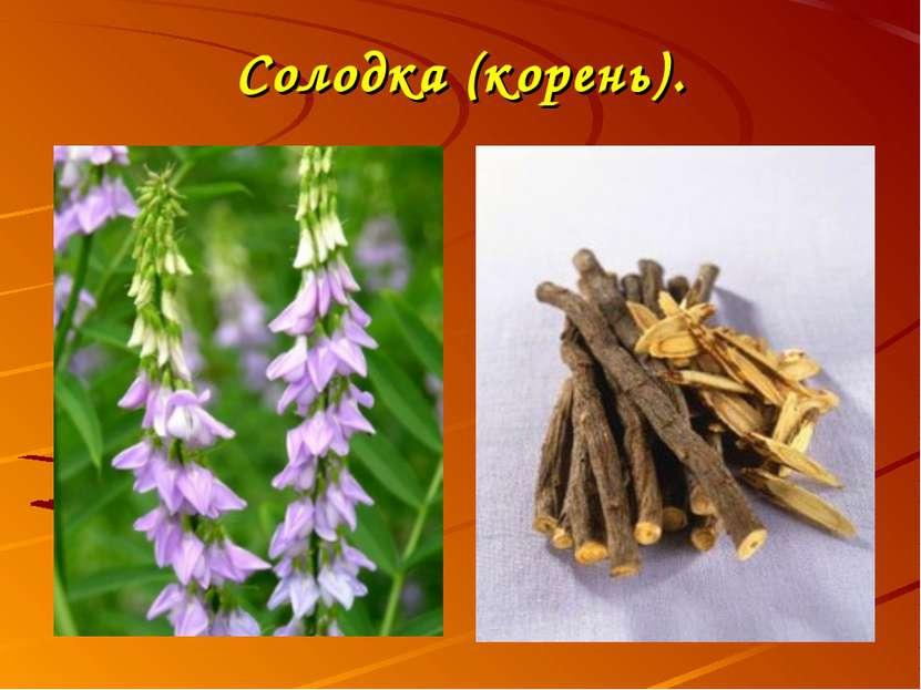 Солодка (корень).