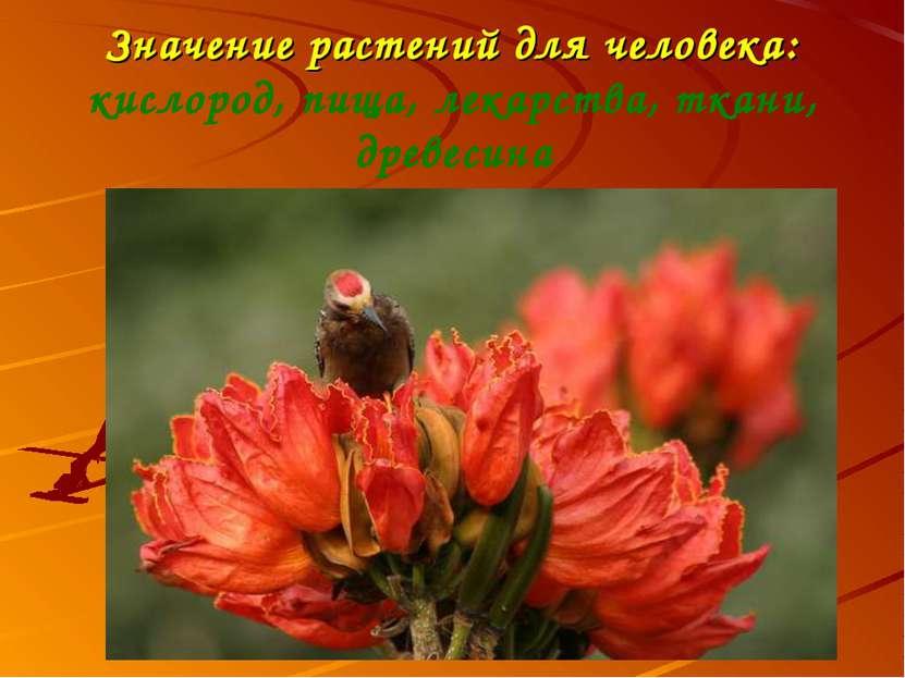 Значение растений для человека: кислород, пища, лекарства, ткани, древесина