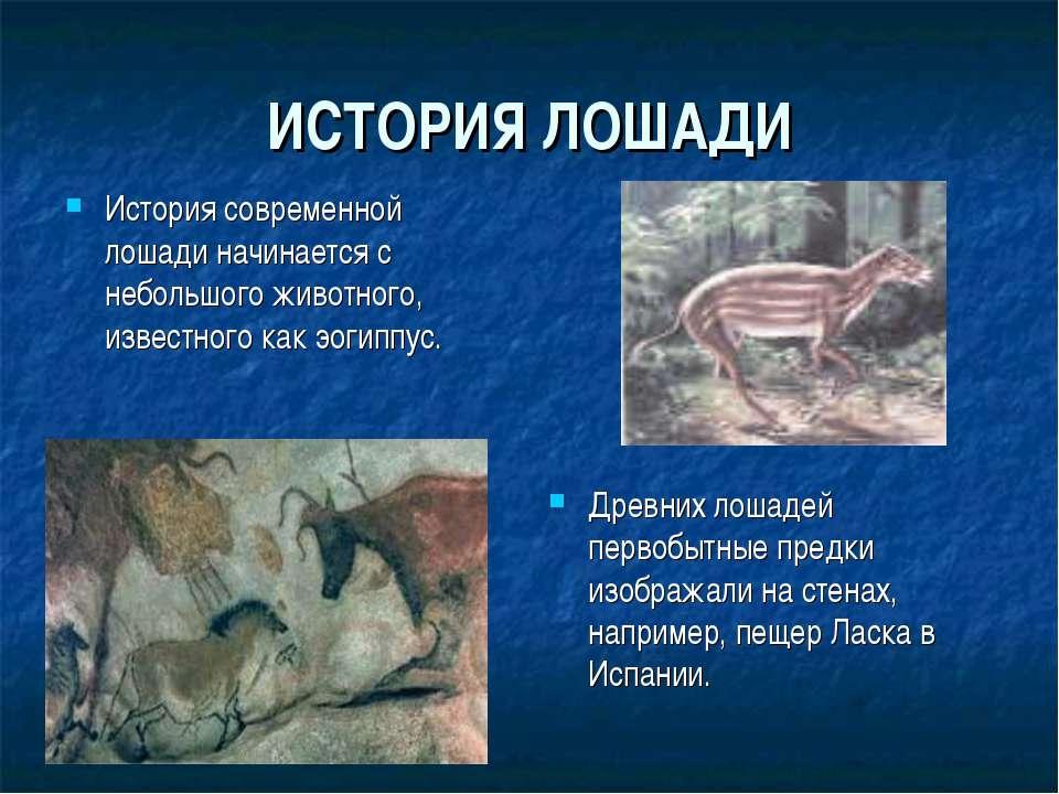 ИСТОРИЯ ЛОШАДИ История современной лошади начинается с небольшого животного, ...
