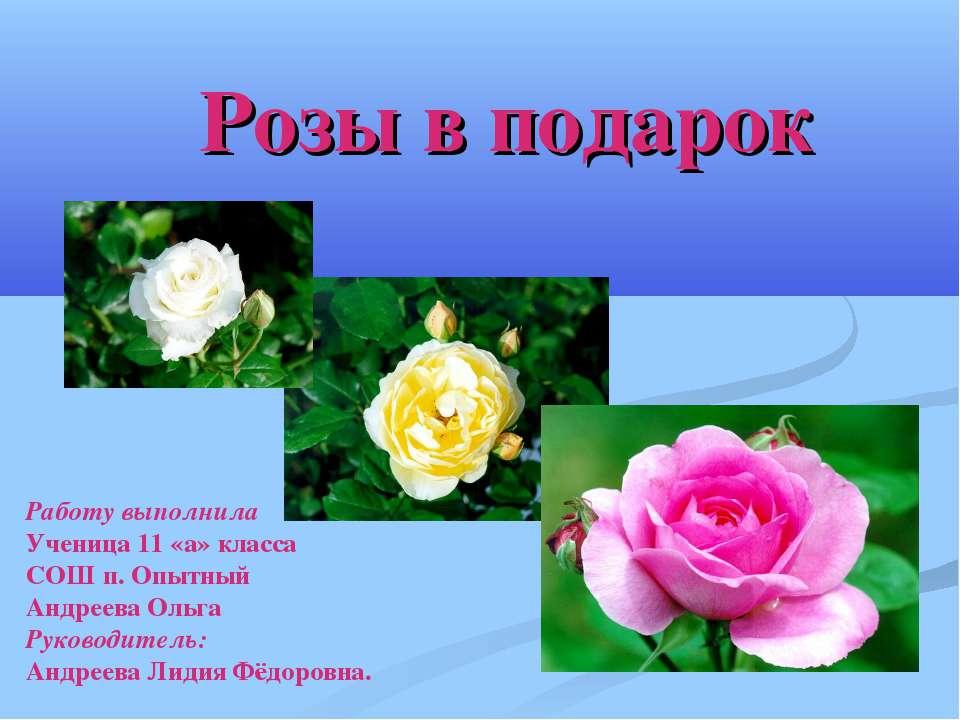 Розы в подарок Работу выполнила Ученица 11 «а» класса СОШ п. Опытный Андреева...