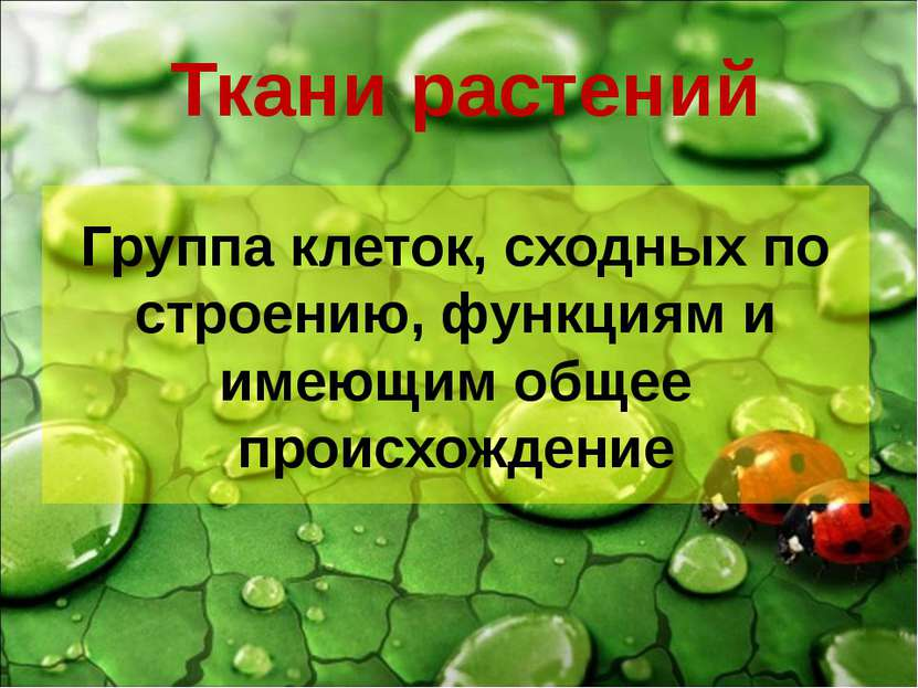Ткани растений Группа клеток, сходных по строению, функциям и имеющим общее п...
