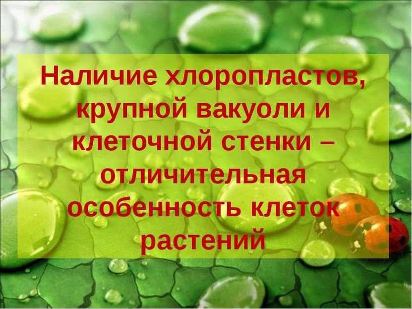Наличие хлоропластов, крупной вакуоли и клеточной стенки – отличительная особ...