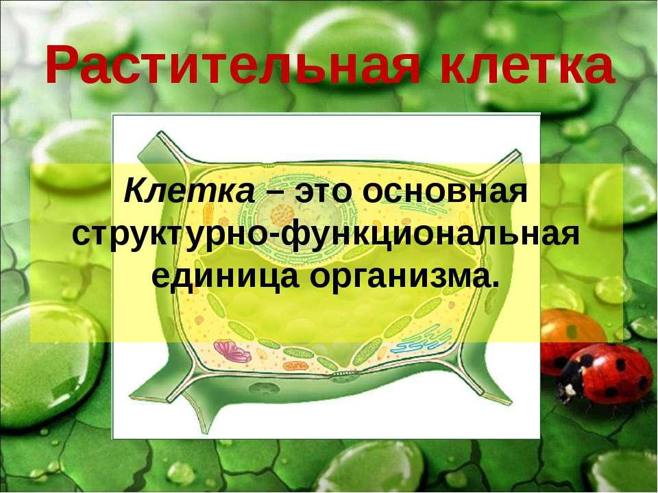 Растительная клетка Клетка – это основная структурно-функциональная единица о...