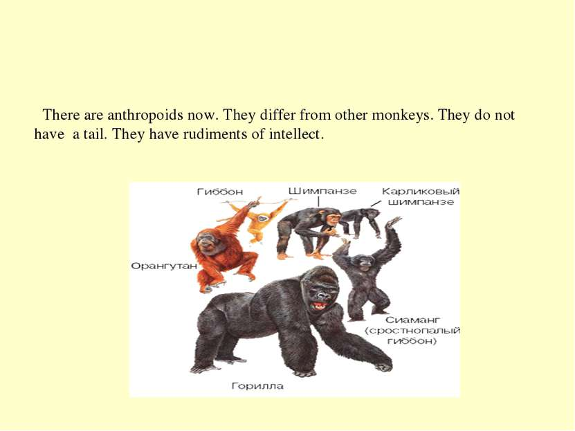 There are anthropoids now. They differ from other monkeys. They do not have a...