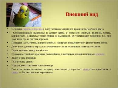 Внешний вид Основная окраска оперения у попугайчиков защитного травянисто-зел...