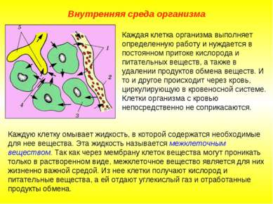 Внутренняя среда организма Каждая клетка организма выполняет определенную раб...