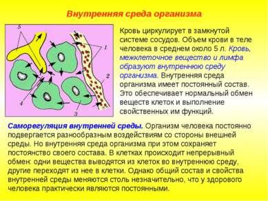 Внутренняя среда организма Саморегуляция внутренней среды. Организм человека ...