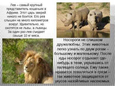 Носороги не слишком дружелюбны. Этих животных легко узнать по двум рогам – бо...