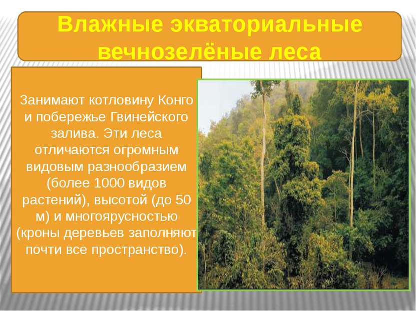 Влажные экваториальные вечнозелёные леса Занимают котловину Конго и побережье...
