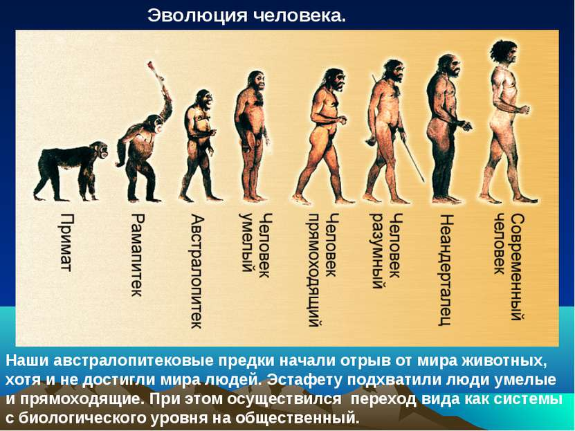 Эволюция человека. Наши австралопитековые предки начали отрыв от мира животны...