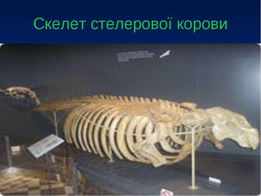 Скелет стелерової корови
